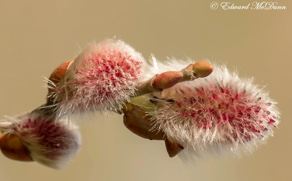 Natuur komt tot leven (1)