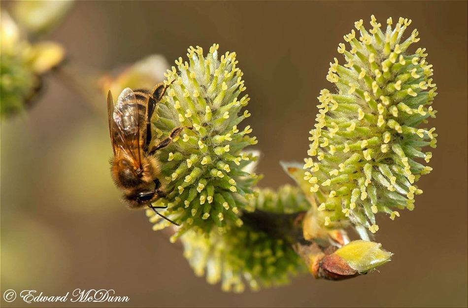 Natuur komt tot leven (2)