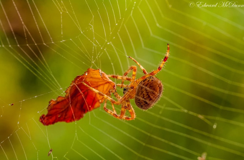 Herfst op volle roeren (2)