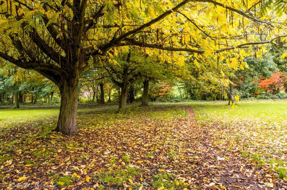 Herfst op volle roeren (4)