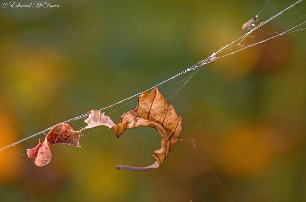 Herfst op volle roeren (5)