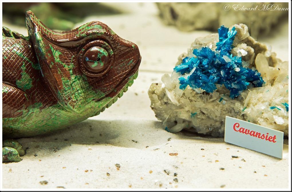 Kameleon (2)