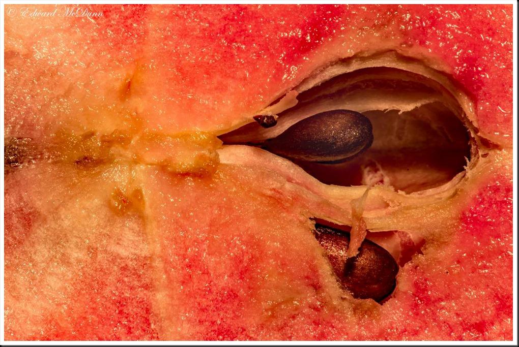 Redlove appel (2)