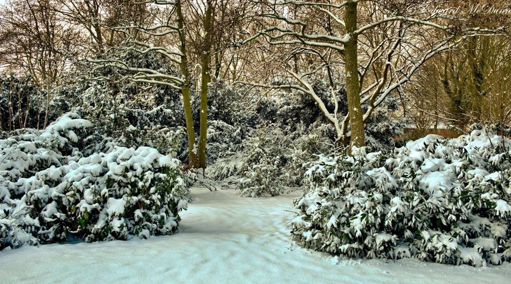 Sneeuwpret (1)