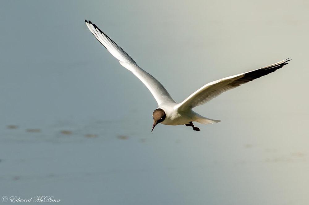 Het jaar van de vogel (7)