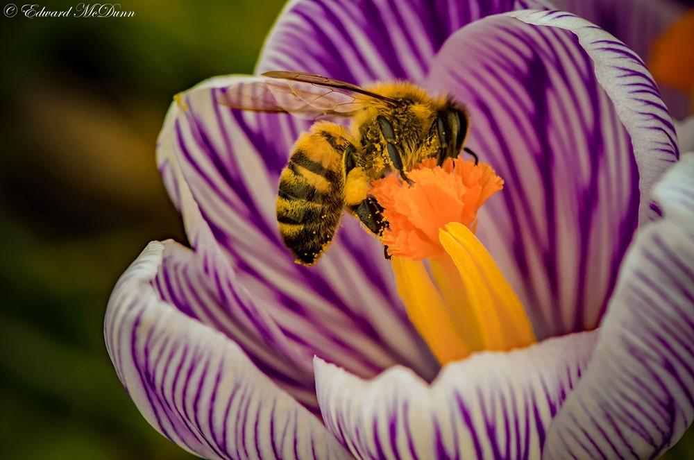 Bijen (2)
