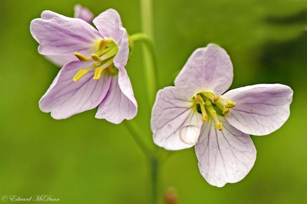 Voorjaar (3)