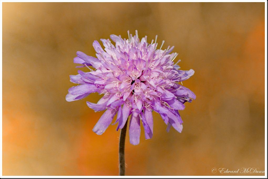 Zomers bloemetje (1)