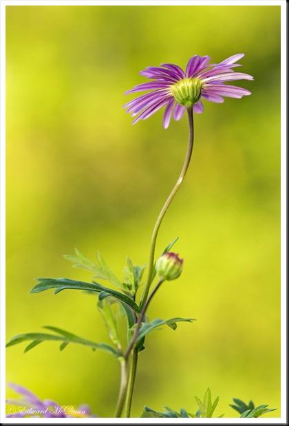 Zomers bloemetje (2)