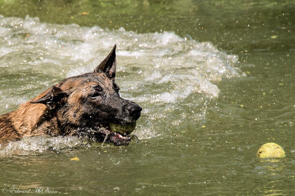 Honden en water (1)