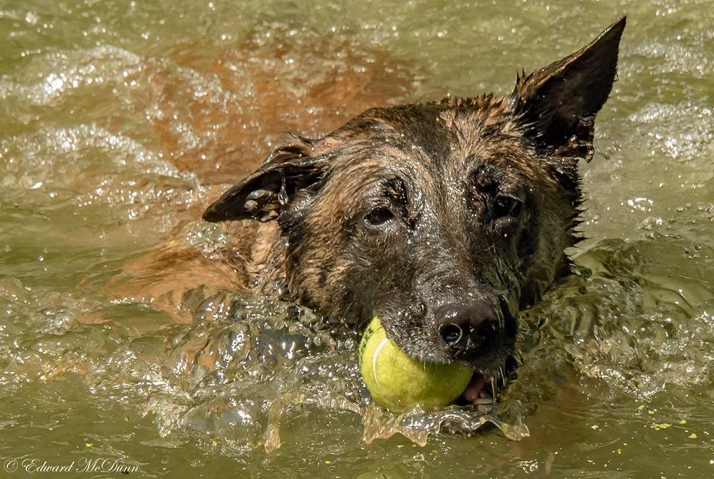 Honden en water (2)