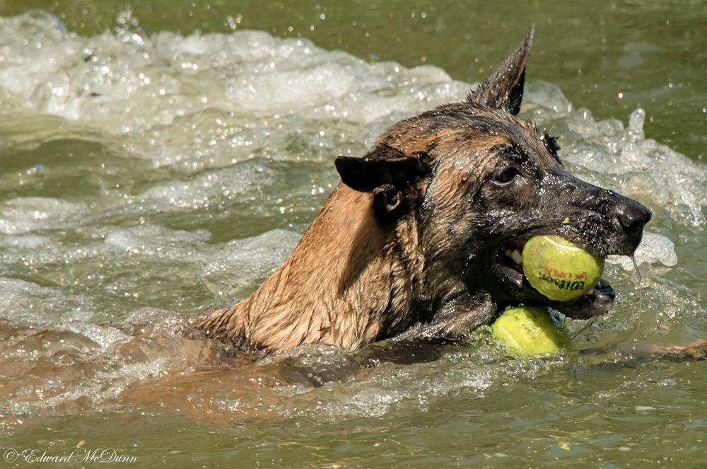 Honden en water (3)