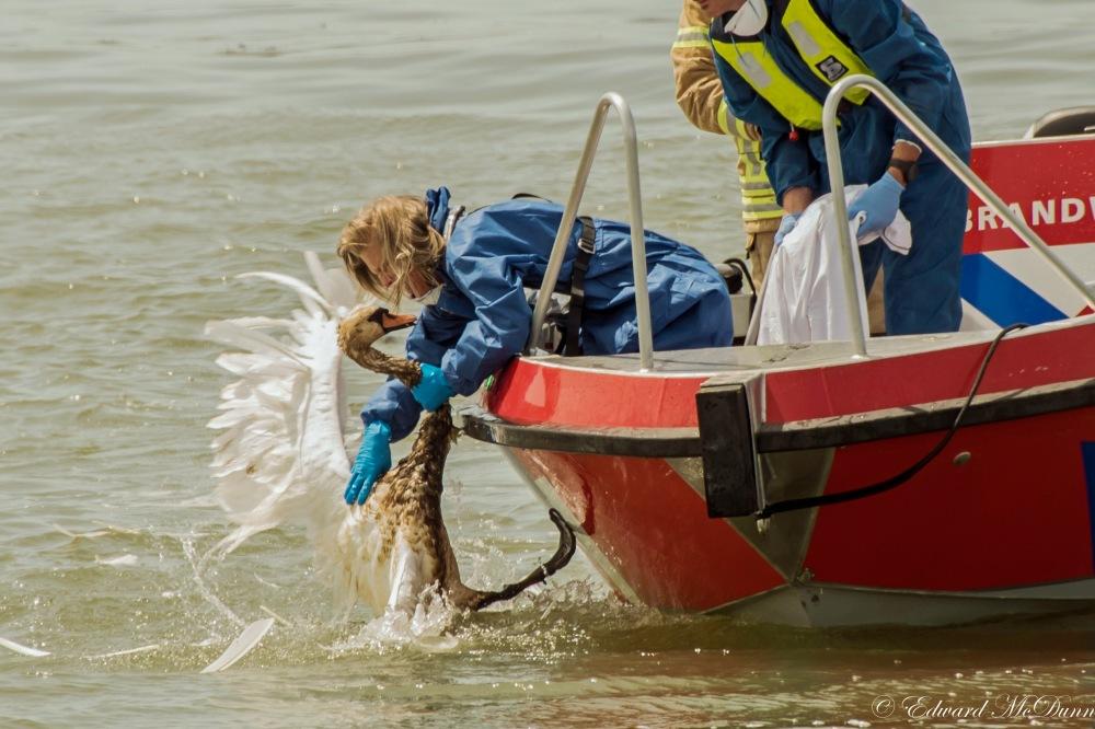 Foto in WWF