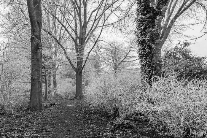 Aangevroren mist (1)