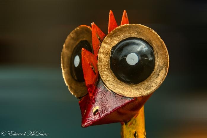Grootoogroodsnavelvogel
