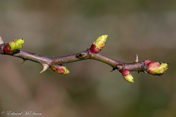Vroege bloei (4)